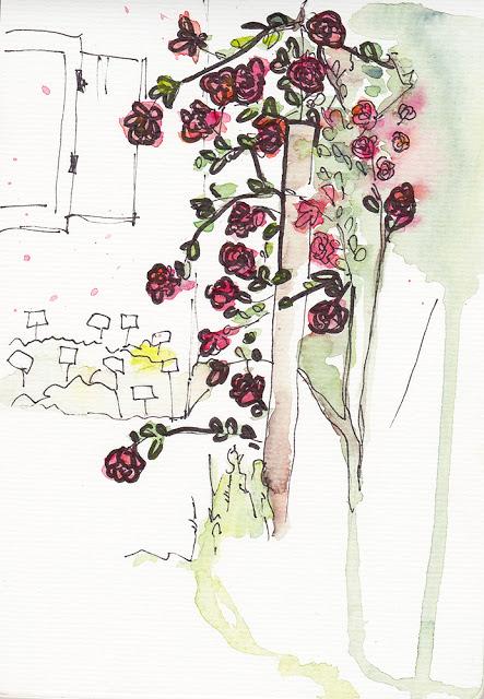 Freya M. - Aquarell Zeichnung, Urban Sketching, Merian Gaerten, Alter Bauerngarten, Basel